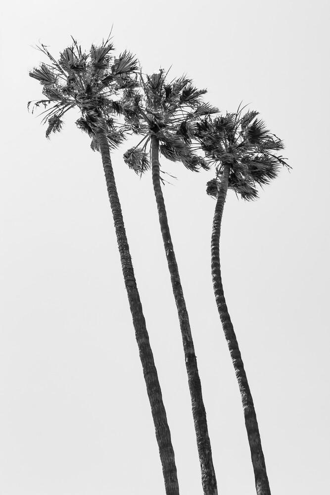 Palmen am Strand in Monochrom - fotokunst von Melanie Viola
