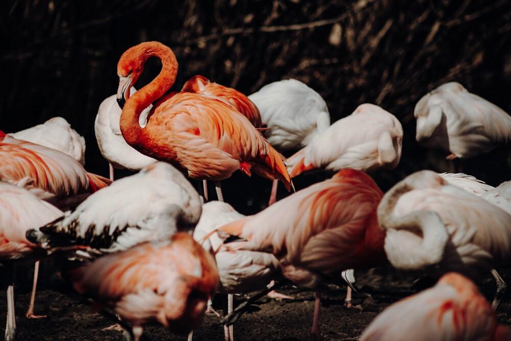 [: flamingo] - fotokunst von Florian Paulus