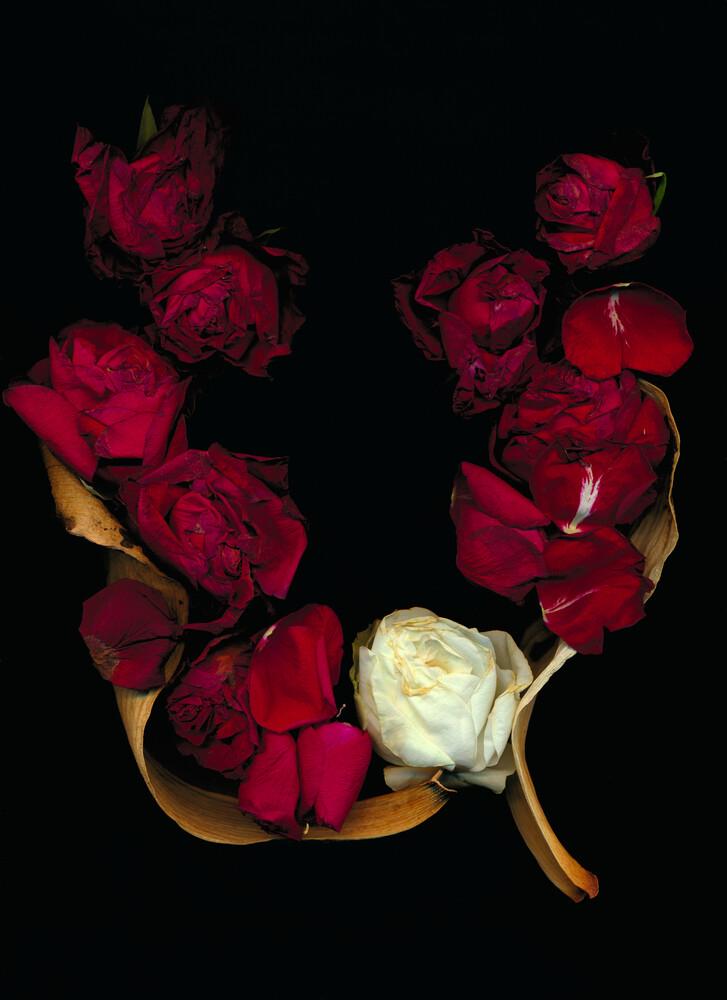 Viola - fotokunst von Ramona Reimann