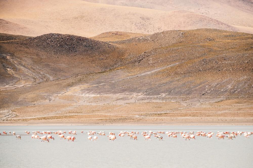 Flamingos in the Andes - fotokunst von Felix Dorn