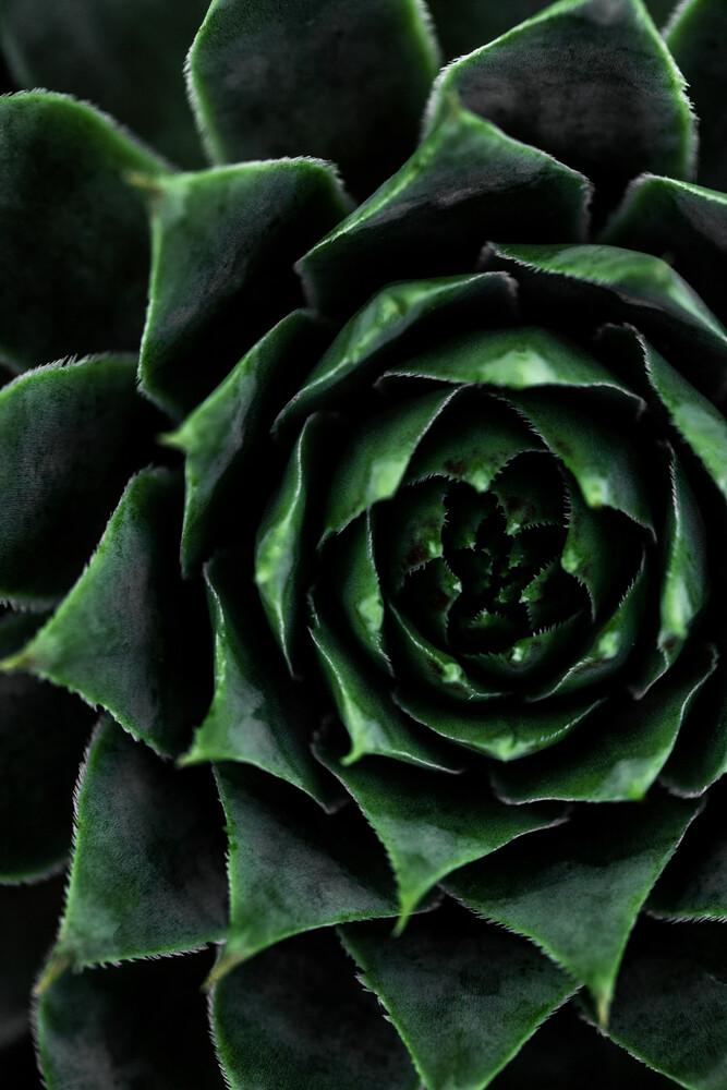 Succulent 2 - Fineart photography by Mareike Böhmer
