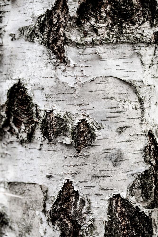 Birch Tree 2 - Fineart photography by Mareike Böhmer