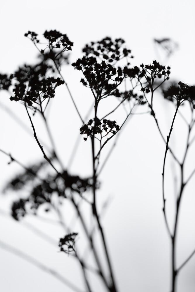 Silhouettes 4 - fotokunst von Mareike Böhmer