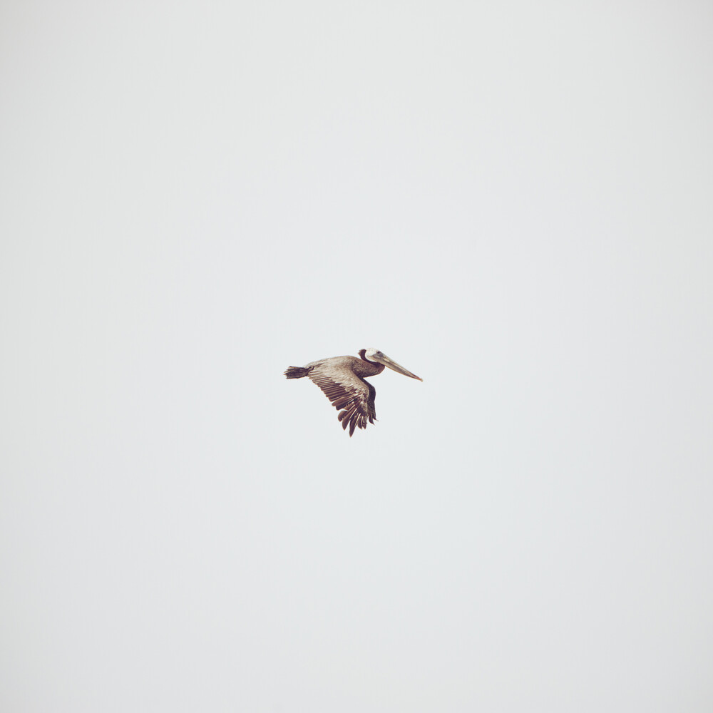 Alleinflug - fotokunst von Kevin Russ