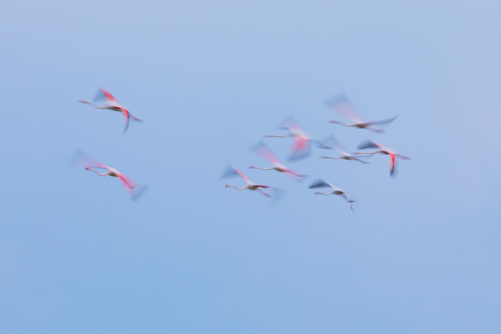 Fliegende Elfen - fotokunst von Frederic Bauer