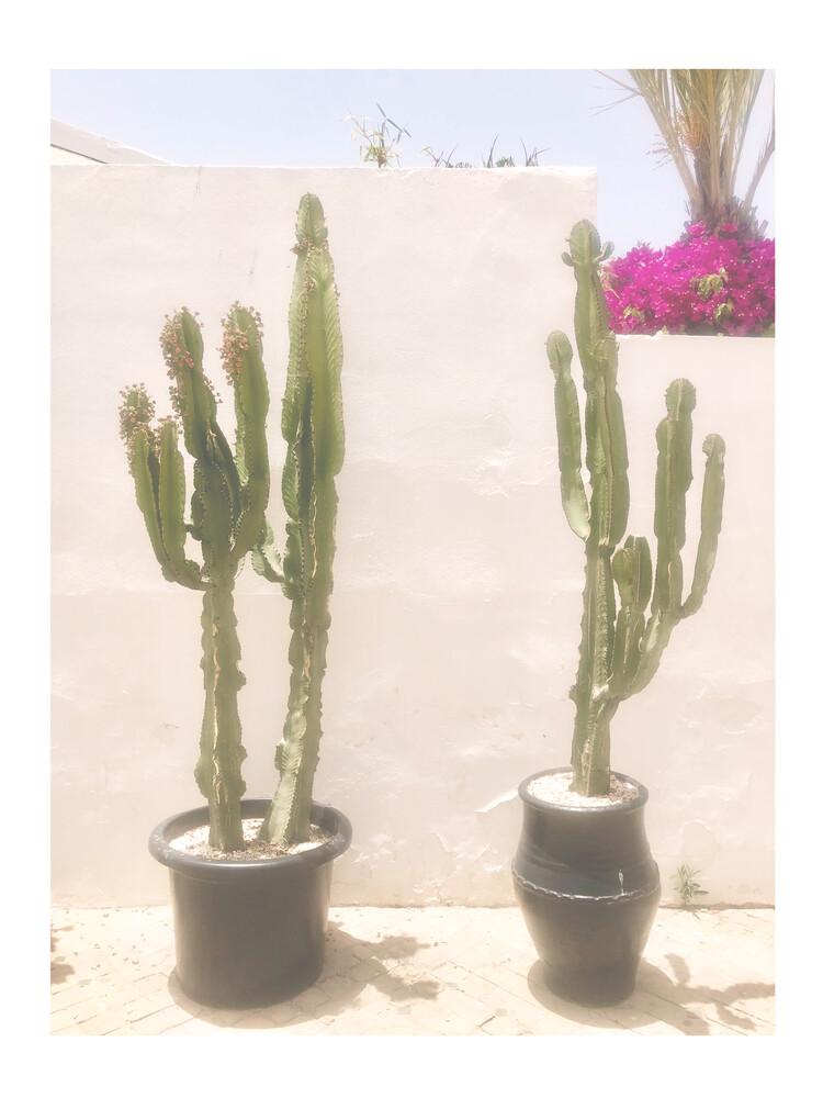 Mantika Cactus - fotokunst von Christina Wolff