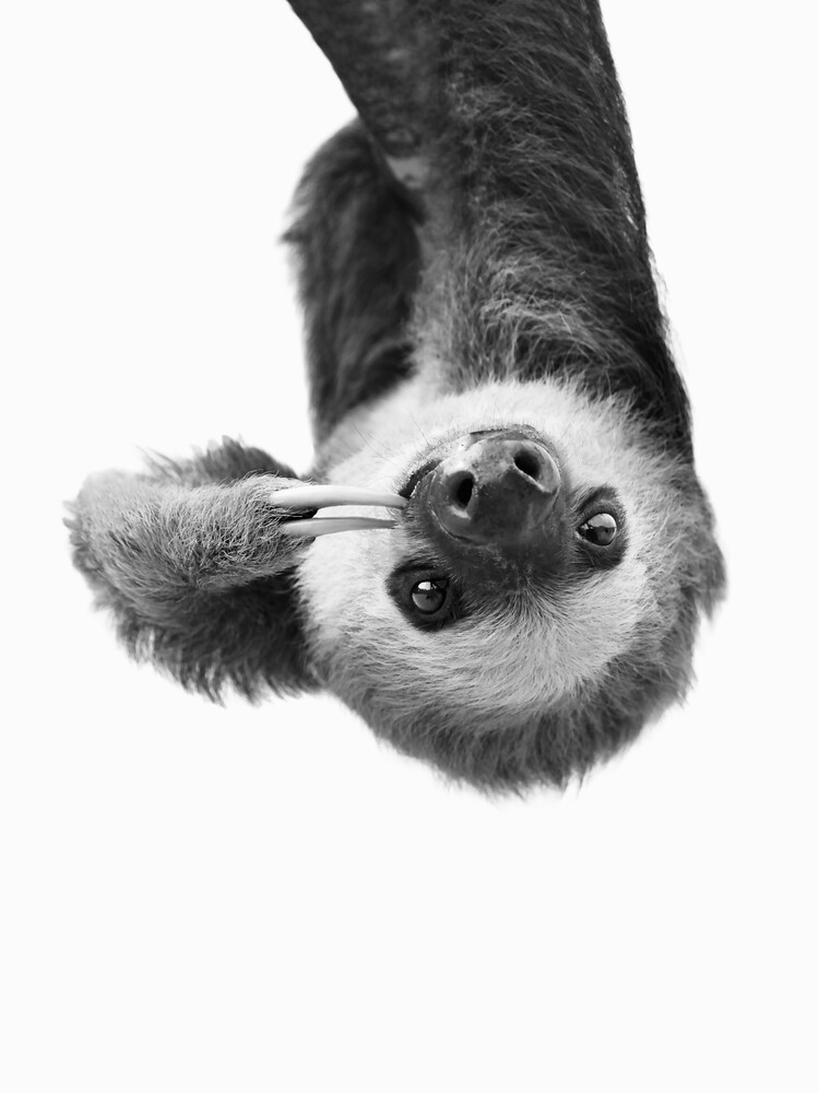 Sloth BW - Fineart photography by Kathrin Pienaar
