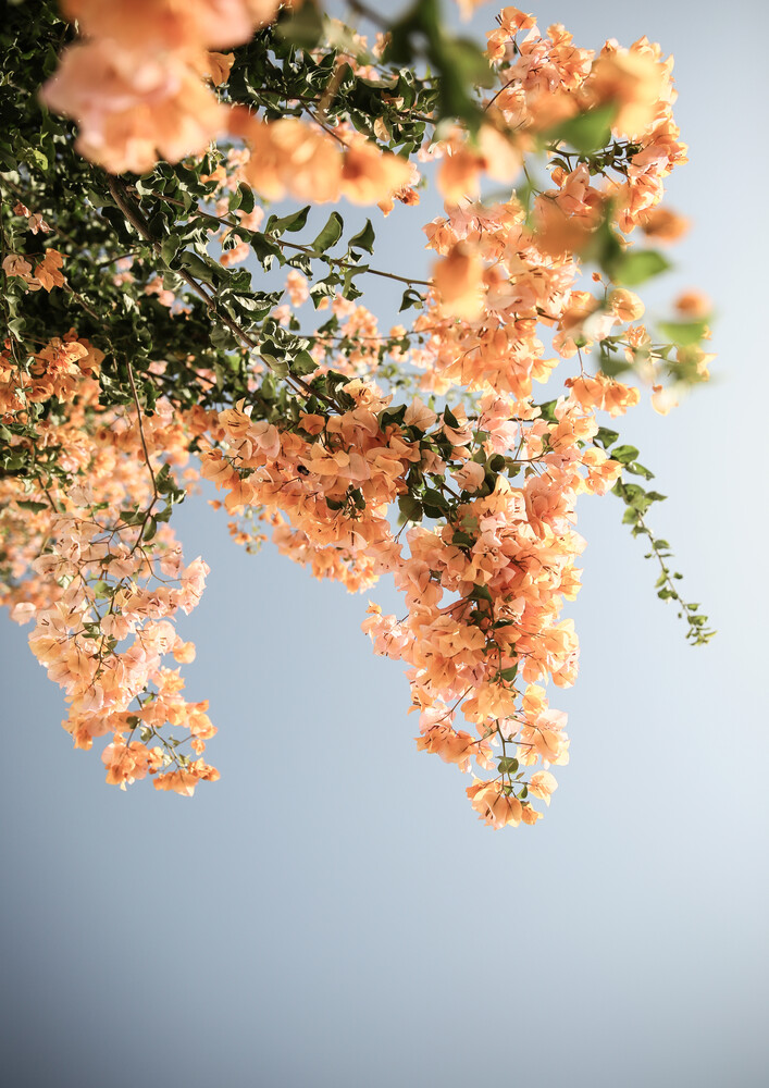 Assos Blooms - Fineart photography by Shot By Clint