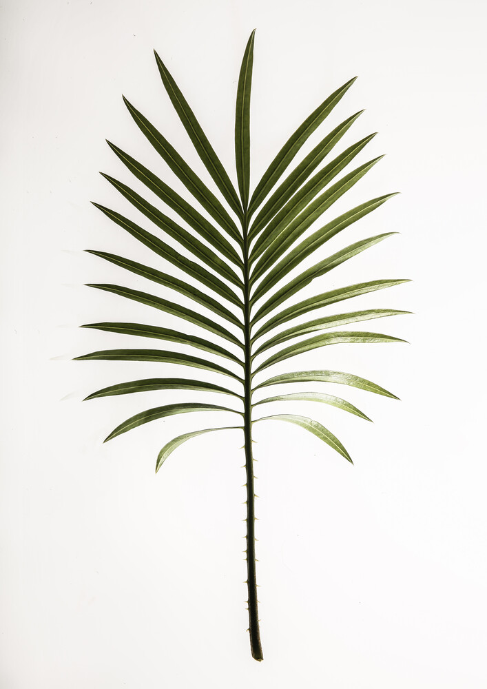 Leaf Study 4 - Fineart photography by Shot by Clint