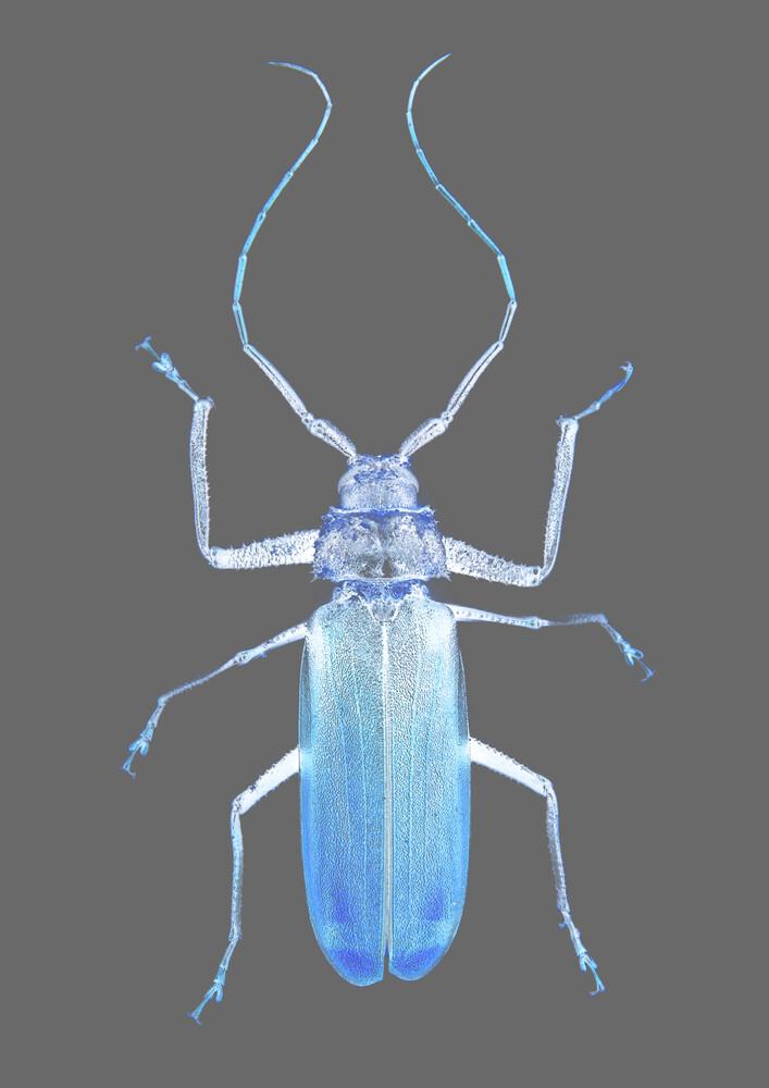Insect Evolution - fotokunst von Shot by Clint
