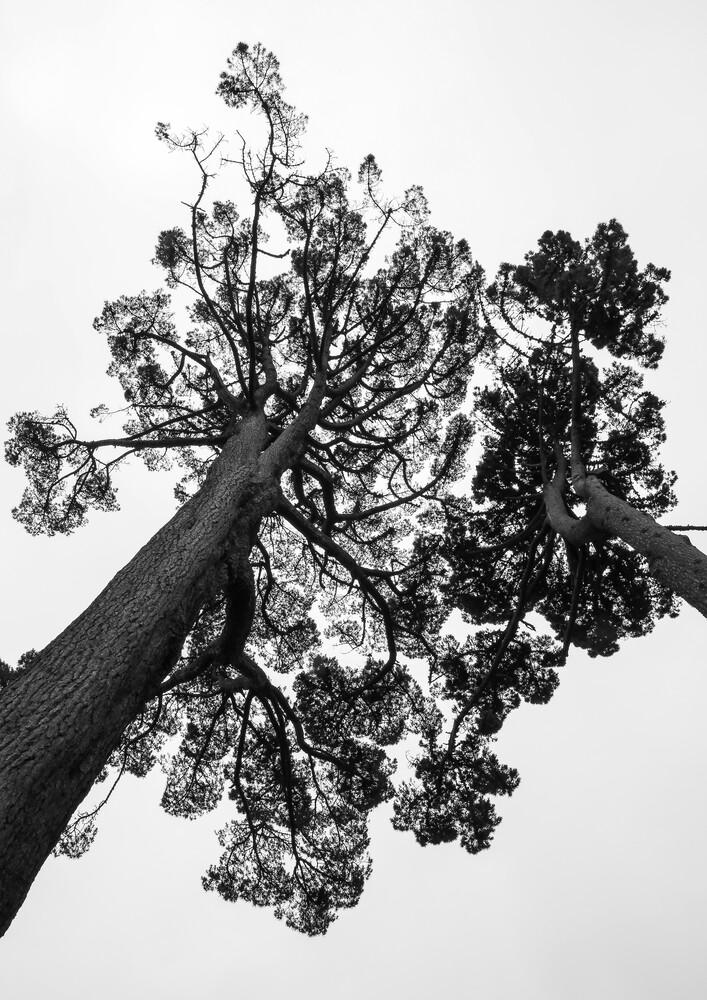 Japanese Garden - fotokunst von Shot by Clint