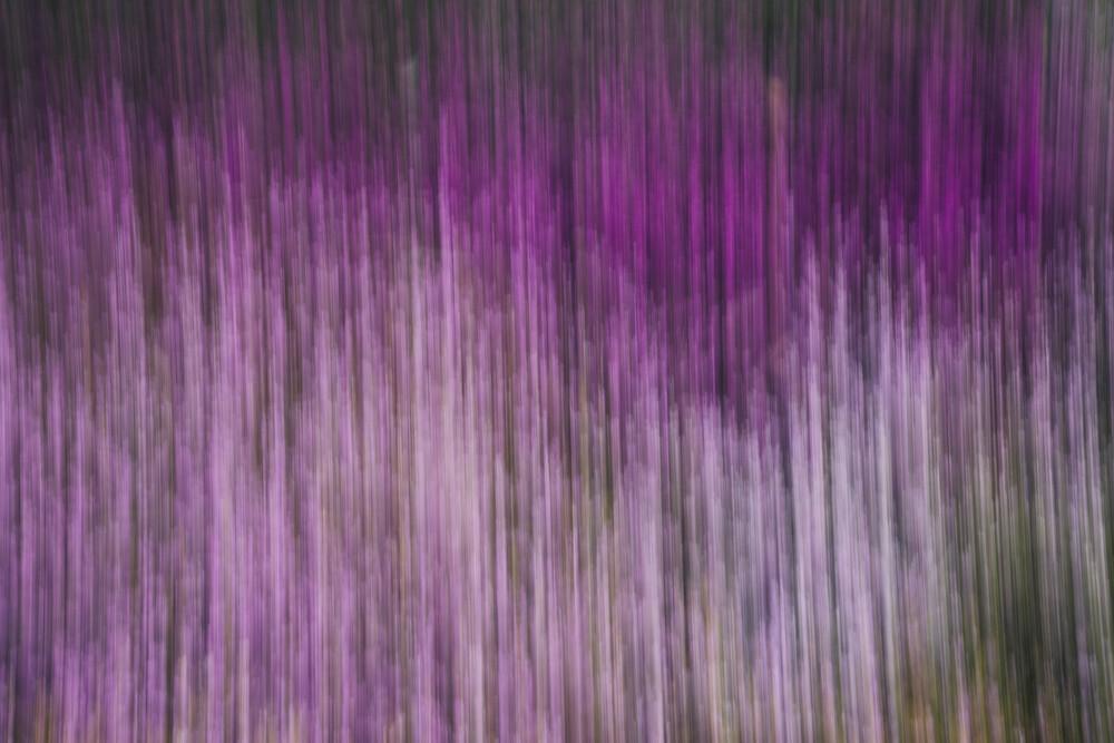 Heide im Frühjahr verwischt - fotokunst von Nadja Jacke