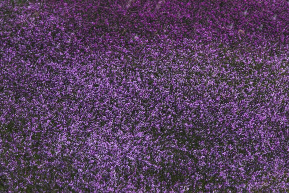 Heide im Frühjahr abstrakt - fotokunst von Nadja Jacke