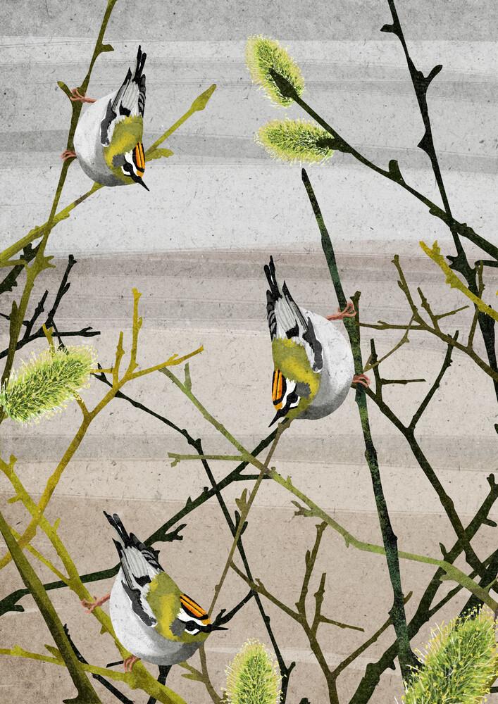 Firecrest birds - fotokunst von Katherine Blower