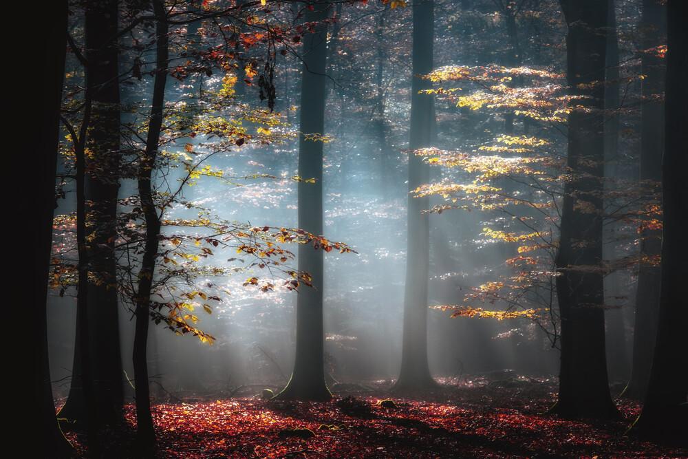 Autumnal Light - Fineart photography by Carsten Meyerdierks