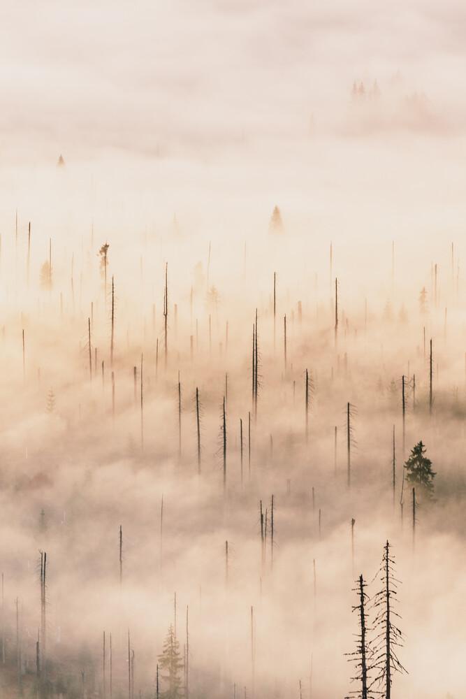 Morgennebel im Tal - fotokunst von Florian Eichinger