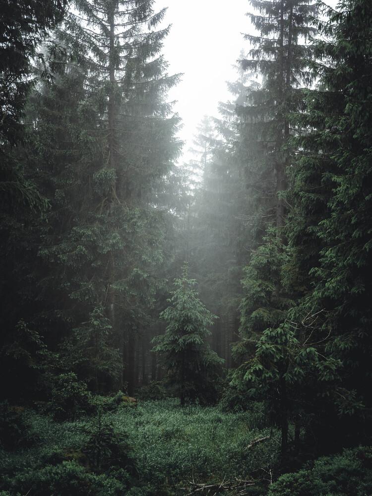 Tief im Wald - fotokunst von Sebastian Wilczewski