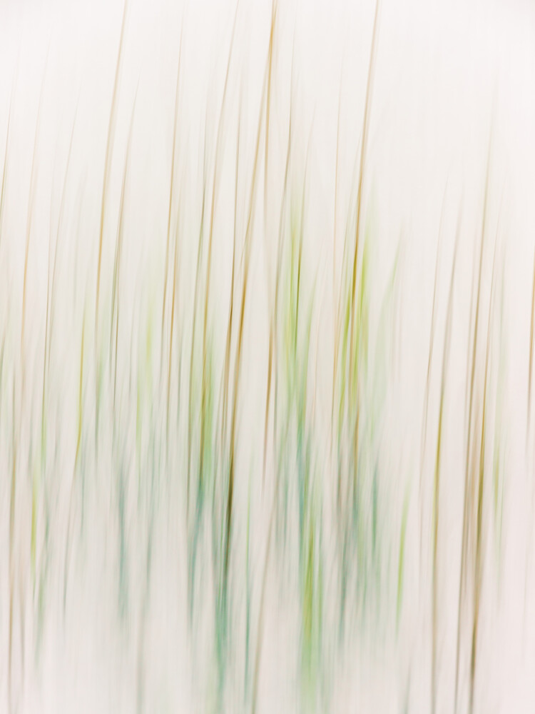 Lines of nature - Fineart photography by Holger Nimtz