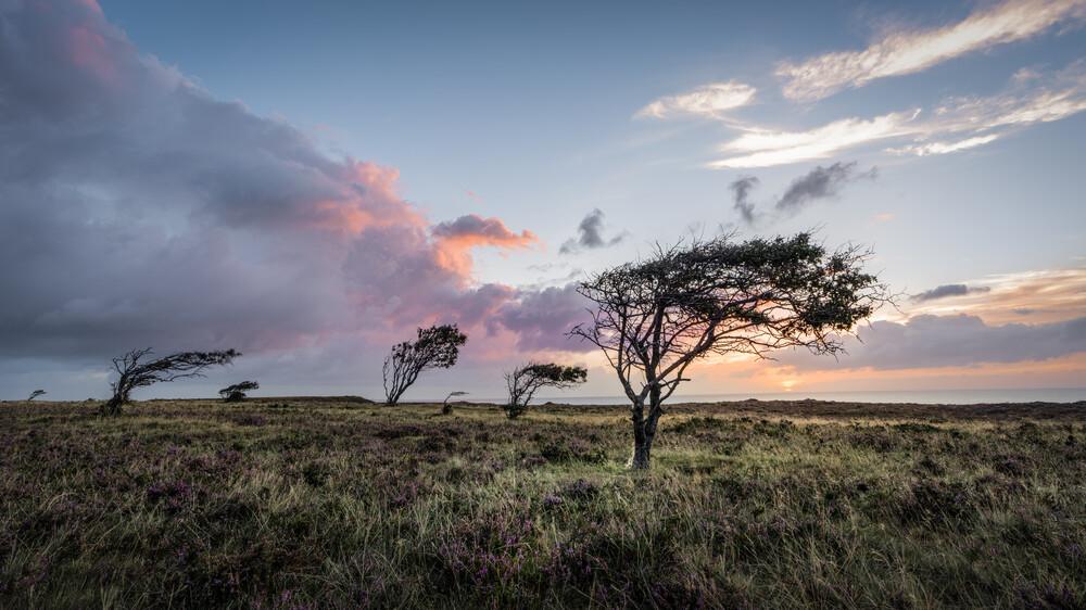 Braderuper Heide | Sylt - Fineart photography by Ronny Behnert