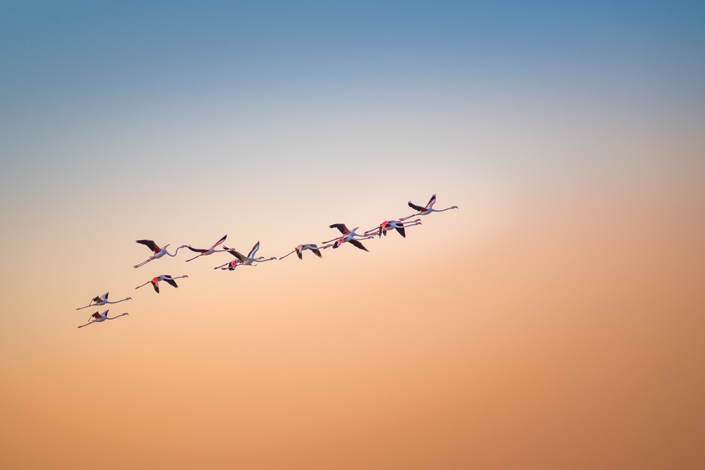 Up and Away - Fineart photography by Thomas Kleinert
