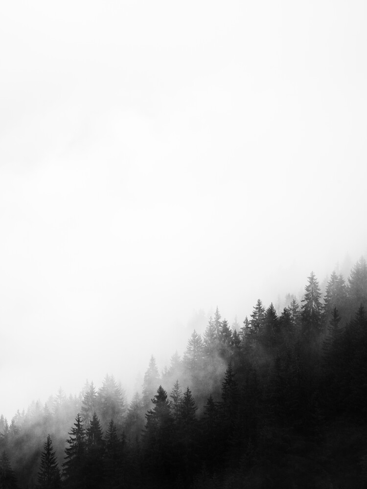 Misty Woods - Fineart photography by Thomas Kleinert