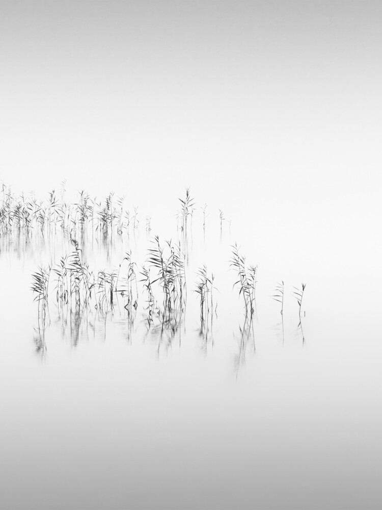 Reed - Fineart photography by Holger Nimtz