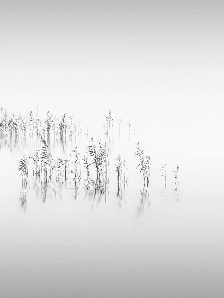 Reed - fotokunst von Holger Nimtz