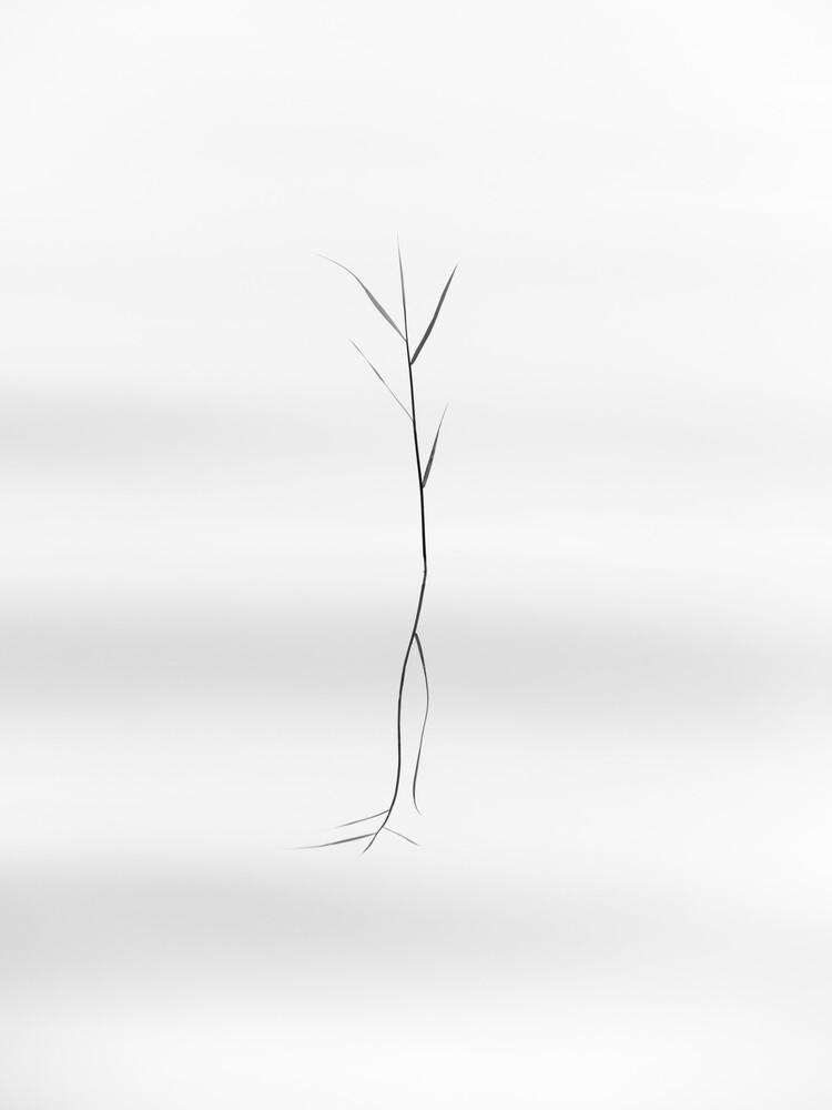 dancing reed - fotokunst von Holger Nimtz