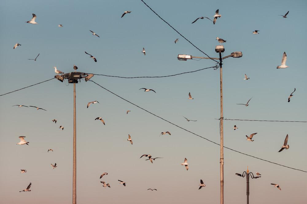 Feeding Frenzy - Fineart photography by AJ Schokora