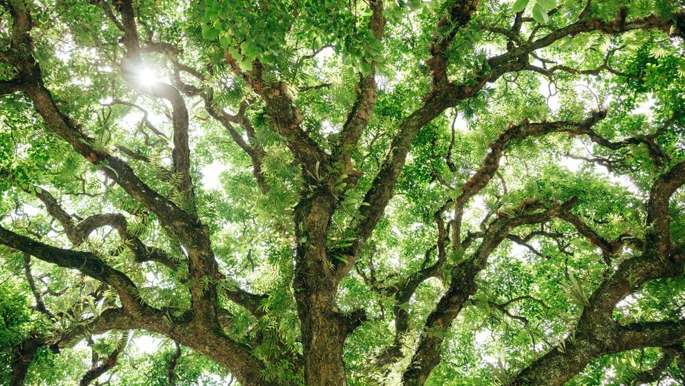 Baumstruktur in Ha Giang - fotokunst von Claas Liegmann