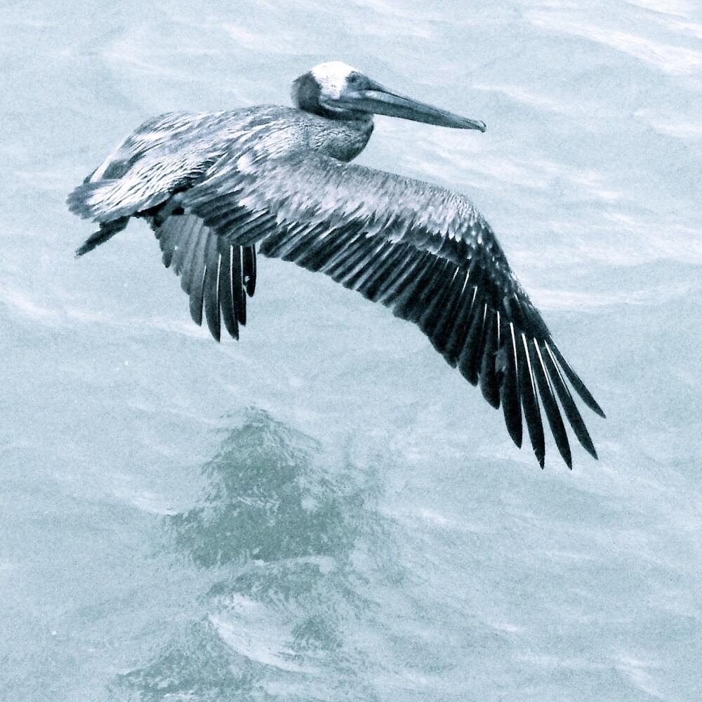 Big bird - fotokunst von Linda Steinhoff
