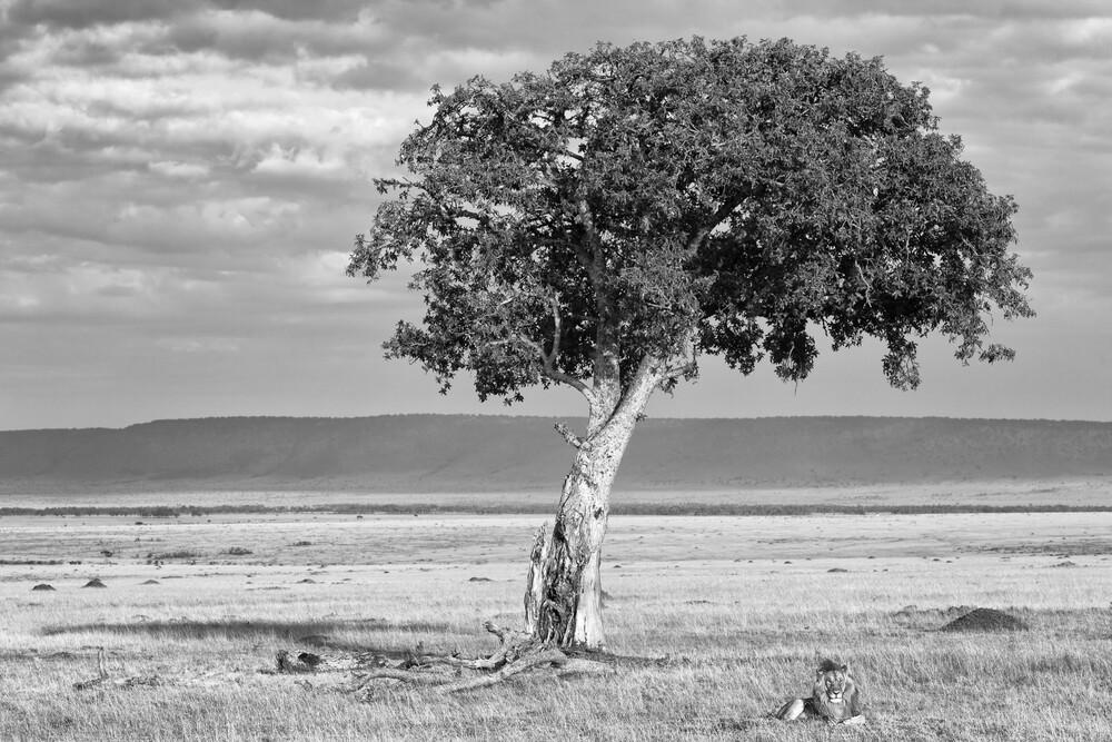 Ruhender Löwe - fotokunst von Angelika Stern