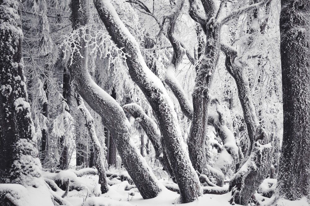 Winter Labyrinth - Fineart photography by Alex Wesche