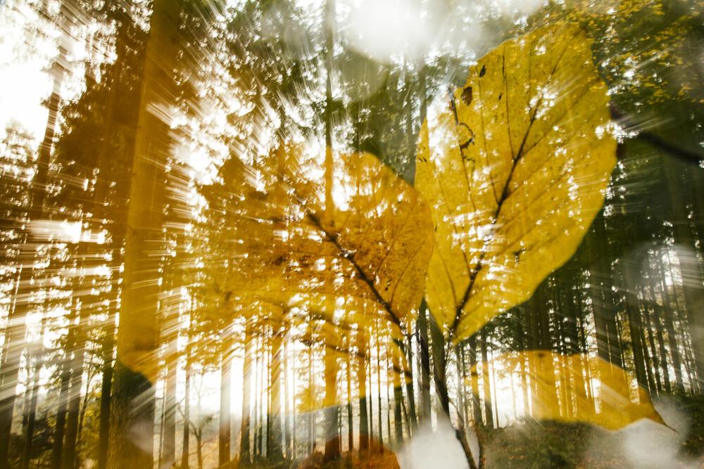 Doppelbelichtung mit Herbstlichem Buchenlaub im Wald - fotokunst von Nadja Jacke