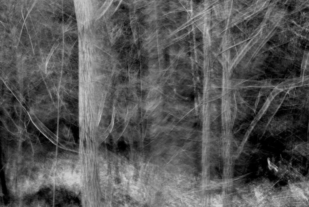 trees 2 - Fineart photography by Sascha Hoffmann-Wacker