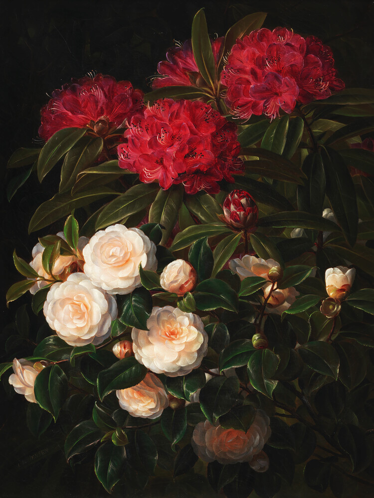 J.L. Jensen: Kamelier og rhododendron - Fineart photography by Art Classics