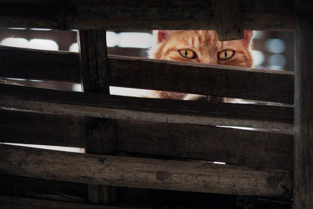 Cat Eyes - Fineart photography by AJ Schokora