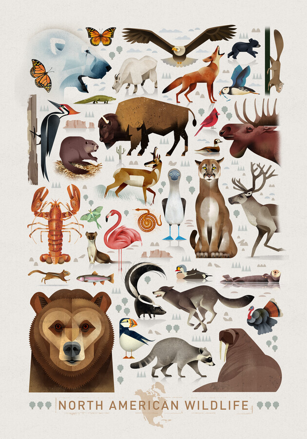 North American Wildlife - Fineart photography by Dieter Braun