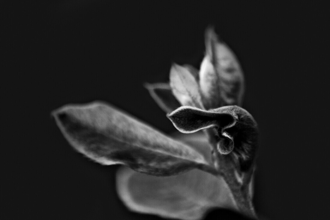 Elegance 2 - Fineart photography by Victoria Knobloch