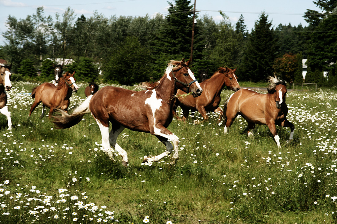 Spring Horse Run - Fineart photography by Kevin Russ