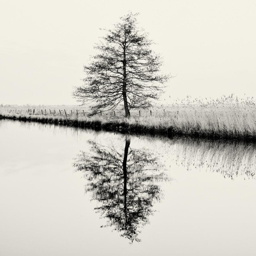 Baum #9 - fotokunst von J. Daniel Hunger