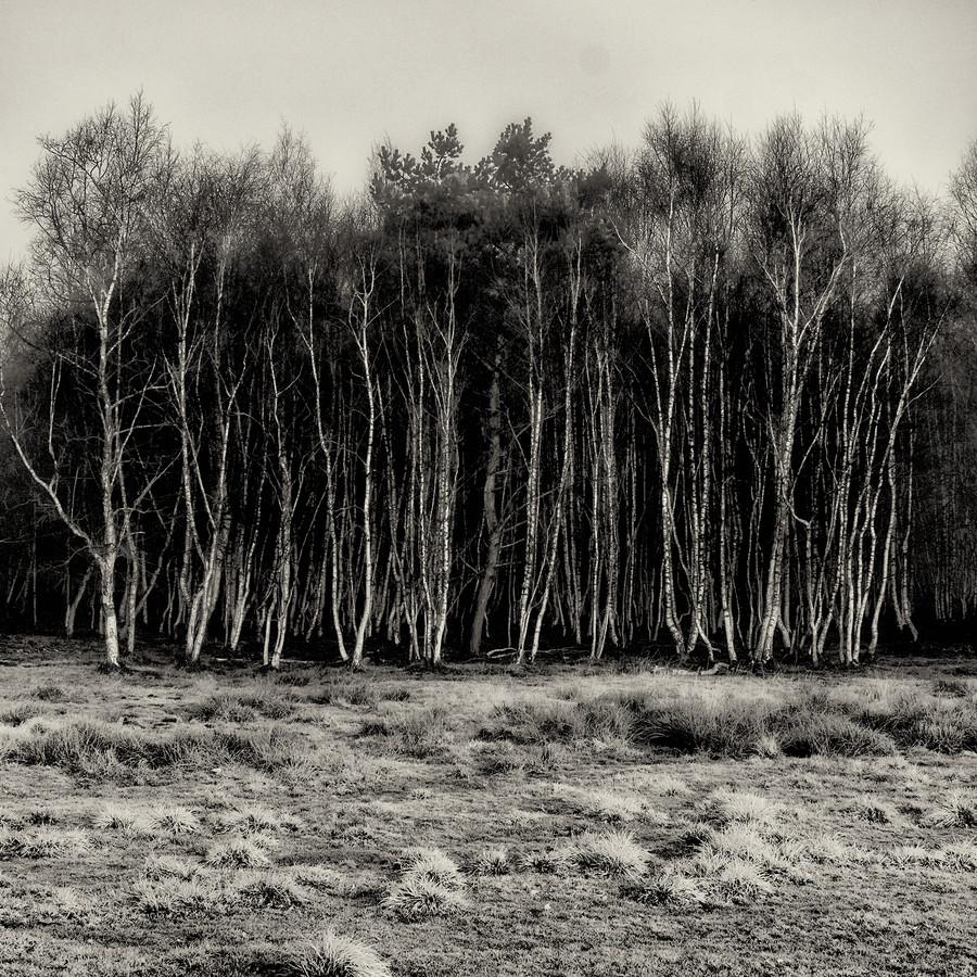 Baum #10 - fotokunst von J. Daniel Hunger