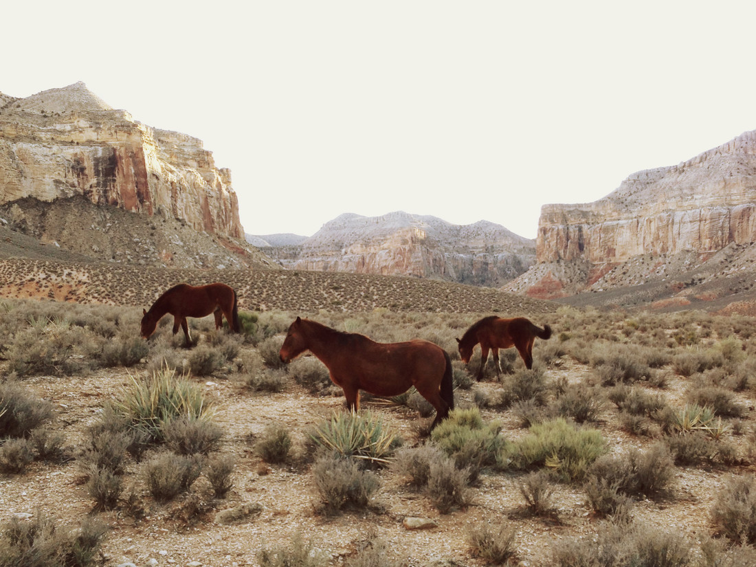 Southwest Wild Horses - Fineart photography by Kevin Russ