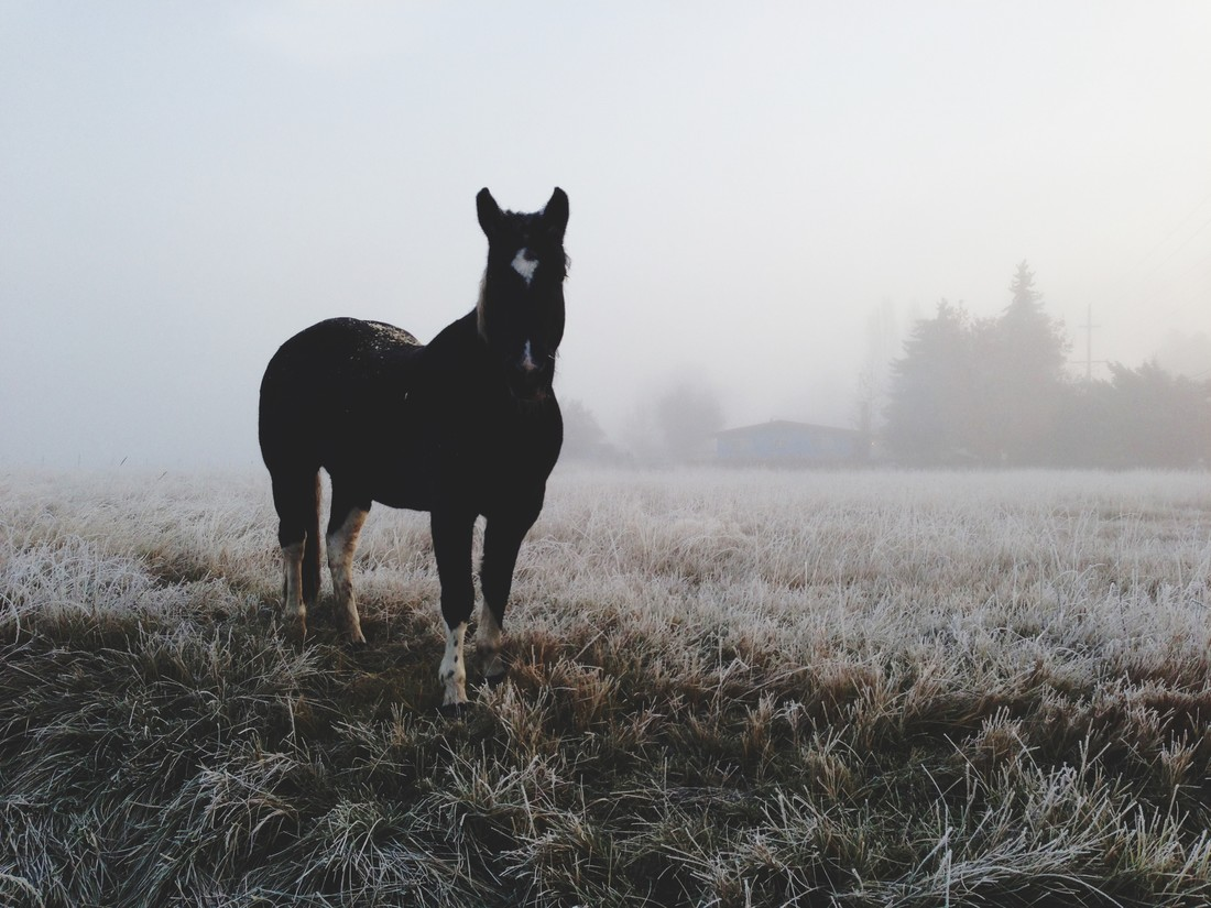 Frosty Morning Horse - Fineart photography by Kevin Russ