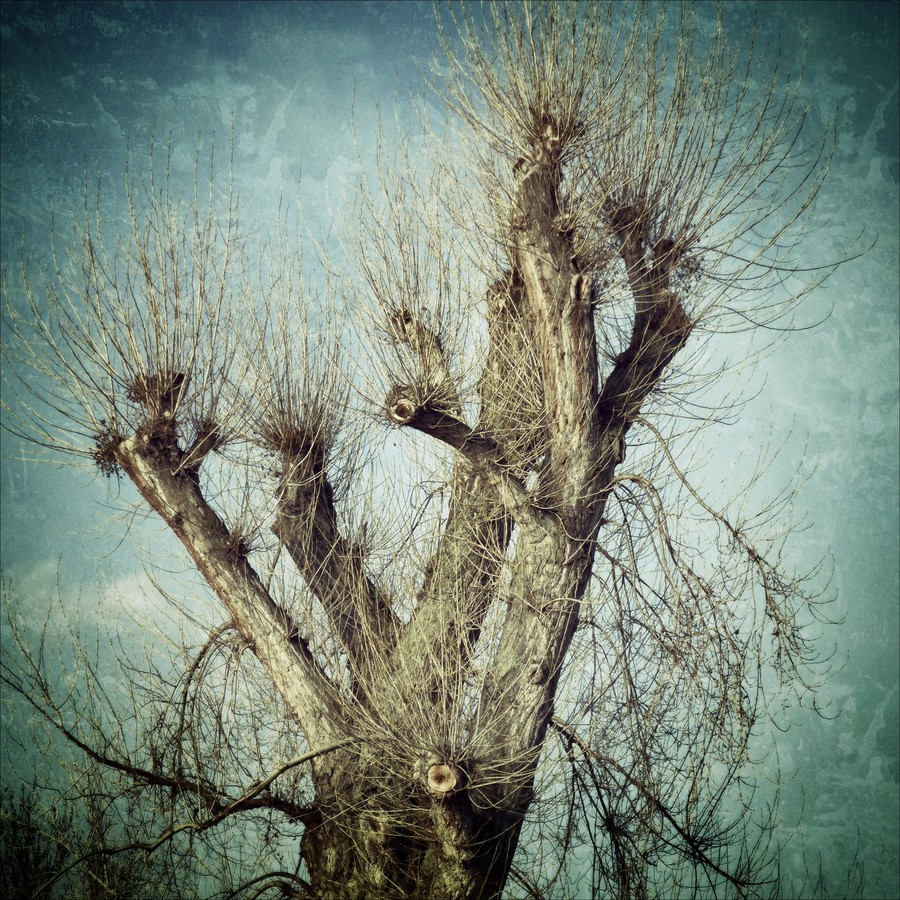 Winterbaum - Fineart photography by Ariane Coerper