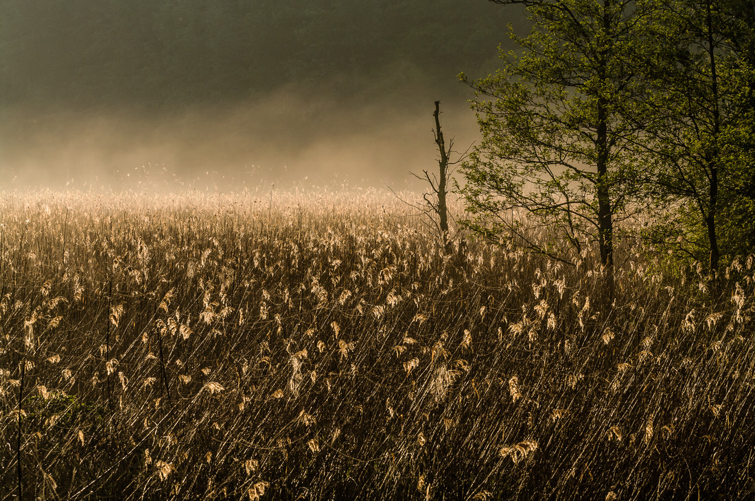 Schilf im Nebel - Fineart photography by Ralf Germer