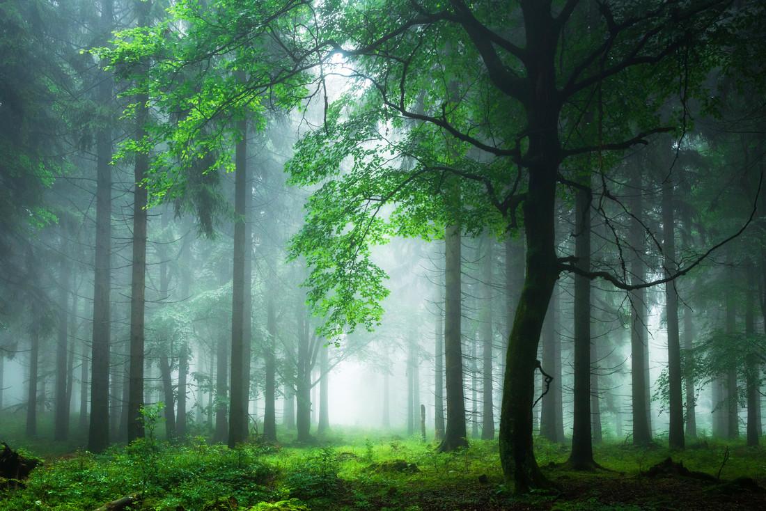 Sommernebel im Thüringer Wald - Fineart photography by Heiko Gerlicher