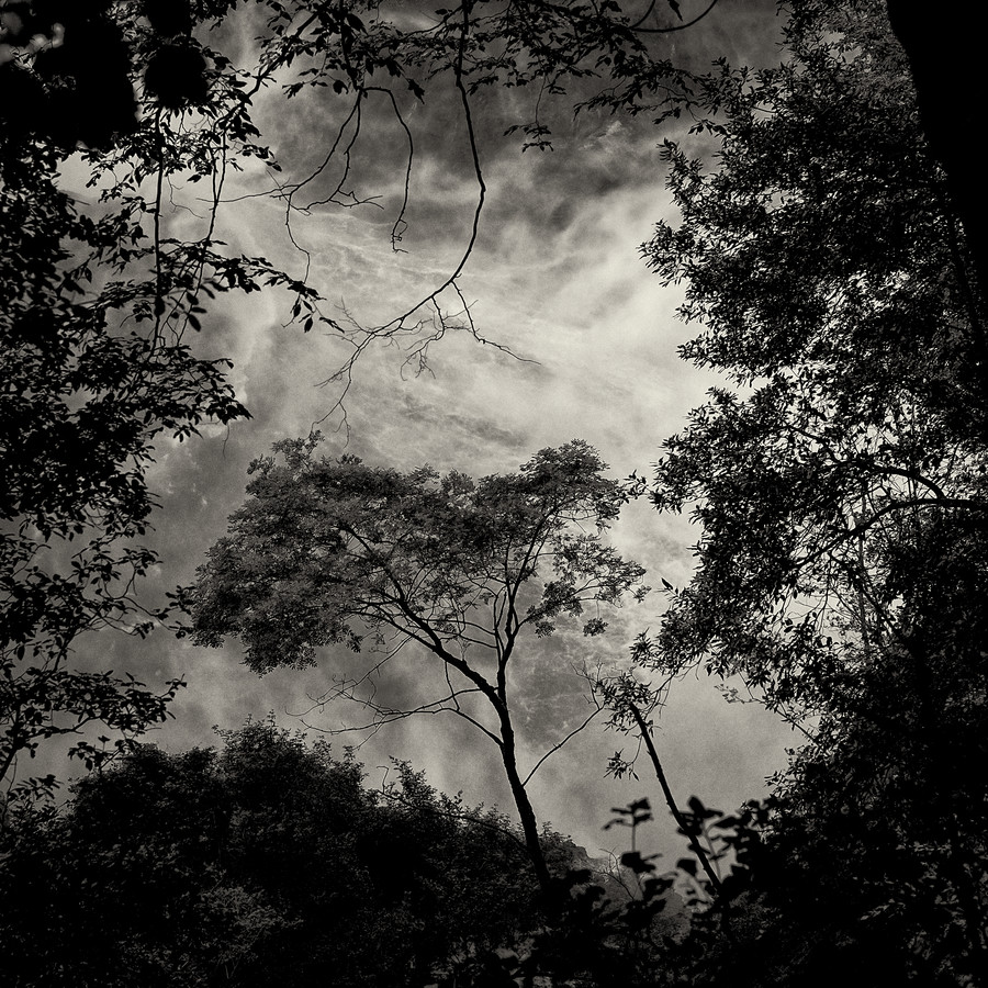 Baum #13 - fotokunst von J. Daniel Hunger