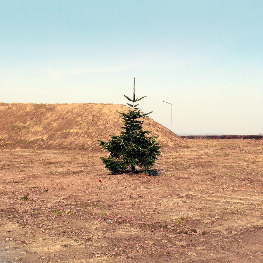 Christmas on Mars - fotokunst von David Foster Nass