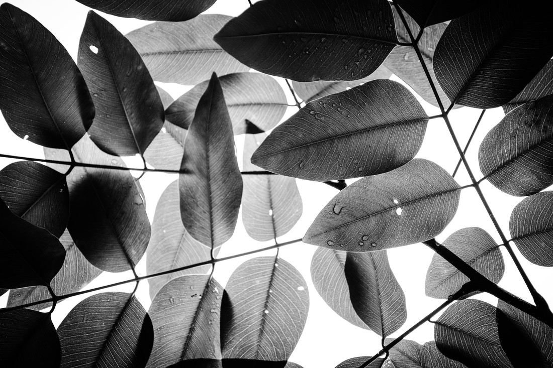 Experiments with Leaves, 2015, 2 - Fineart photography by Tal Paz Fridman